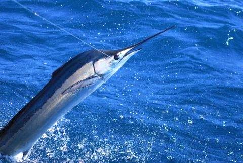 Bermuda fishing charters deep sea fishing fishing trip for Fishing in bermuda