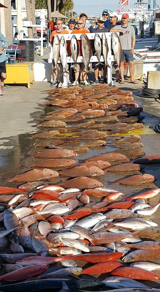 Pensacola fishing charters deep sea fishing for Pensacola deep sea fishing